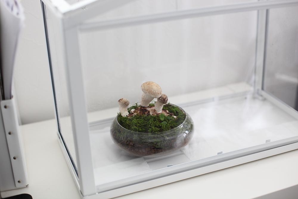 ikeaのハウス型の小温室