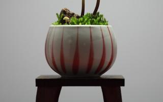 Mushroom BONSAI